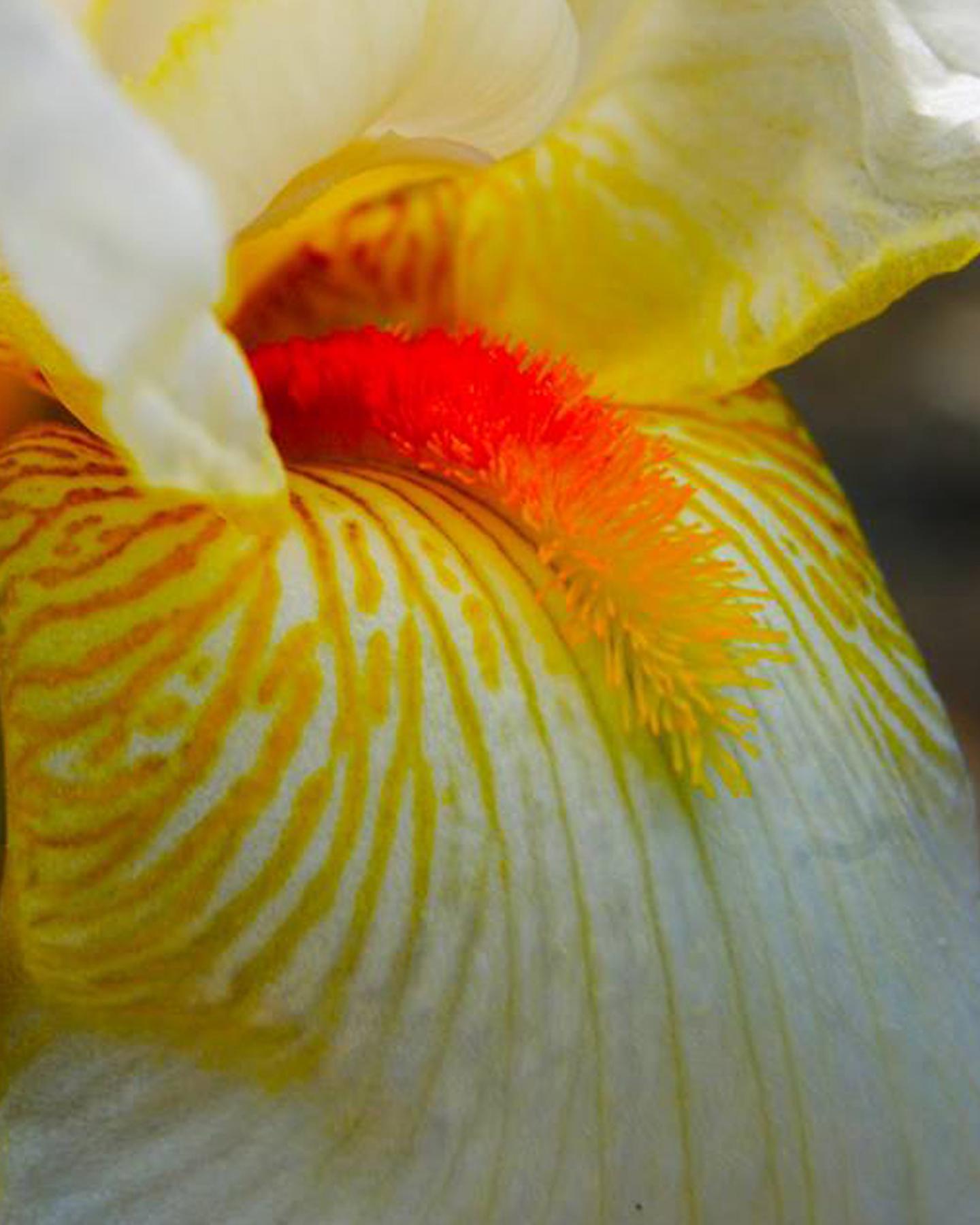 Botanical Macros