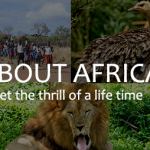 About Afrika Tours